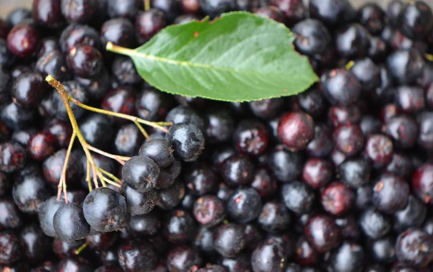 Ar sveikiausi produktai – sveikiausia mityba